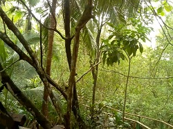 Live view from Costa Rica's Chosa Manglar nature preserve.  Monkeys and other animals are sometimes visible if you wait long enough