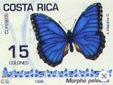 Butterfly on a Costa Rica stamp