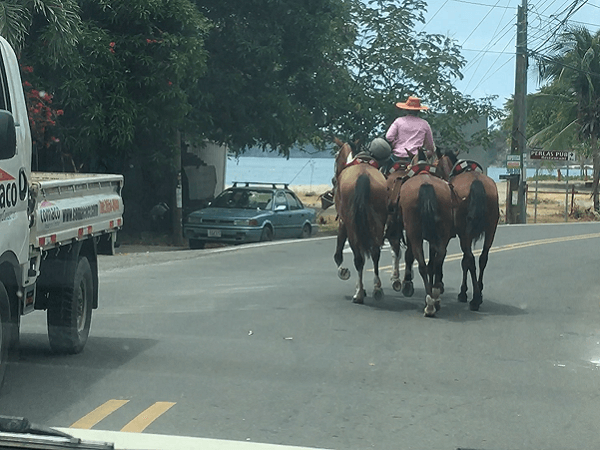 Horse owner escorts a group across the street