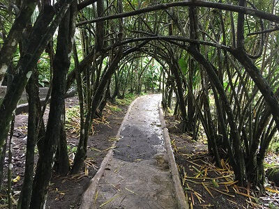 A dense tree canopy provides shade on the nature trail walkway