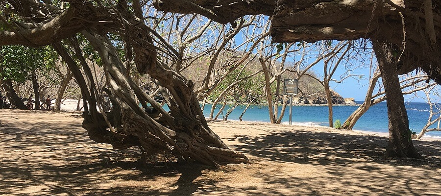 View of PLaya Zapotillal from under the shade trees.