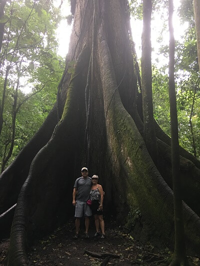 Huge ceiba tree and massive root system.