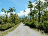 Typical road through the jungle in Costa Rica